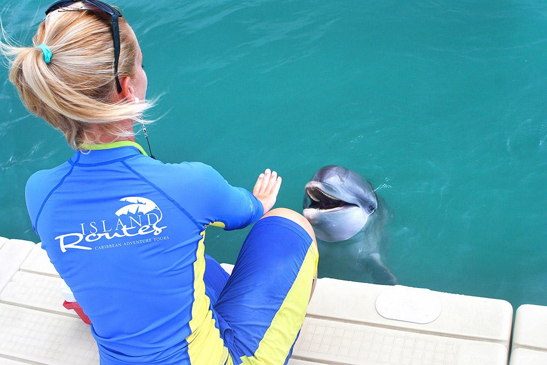dolphin trainer in jamaica