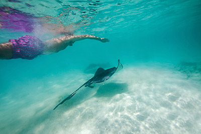 antigua stingray city