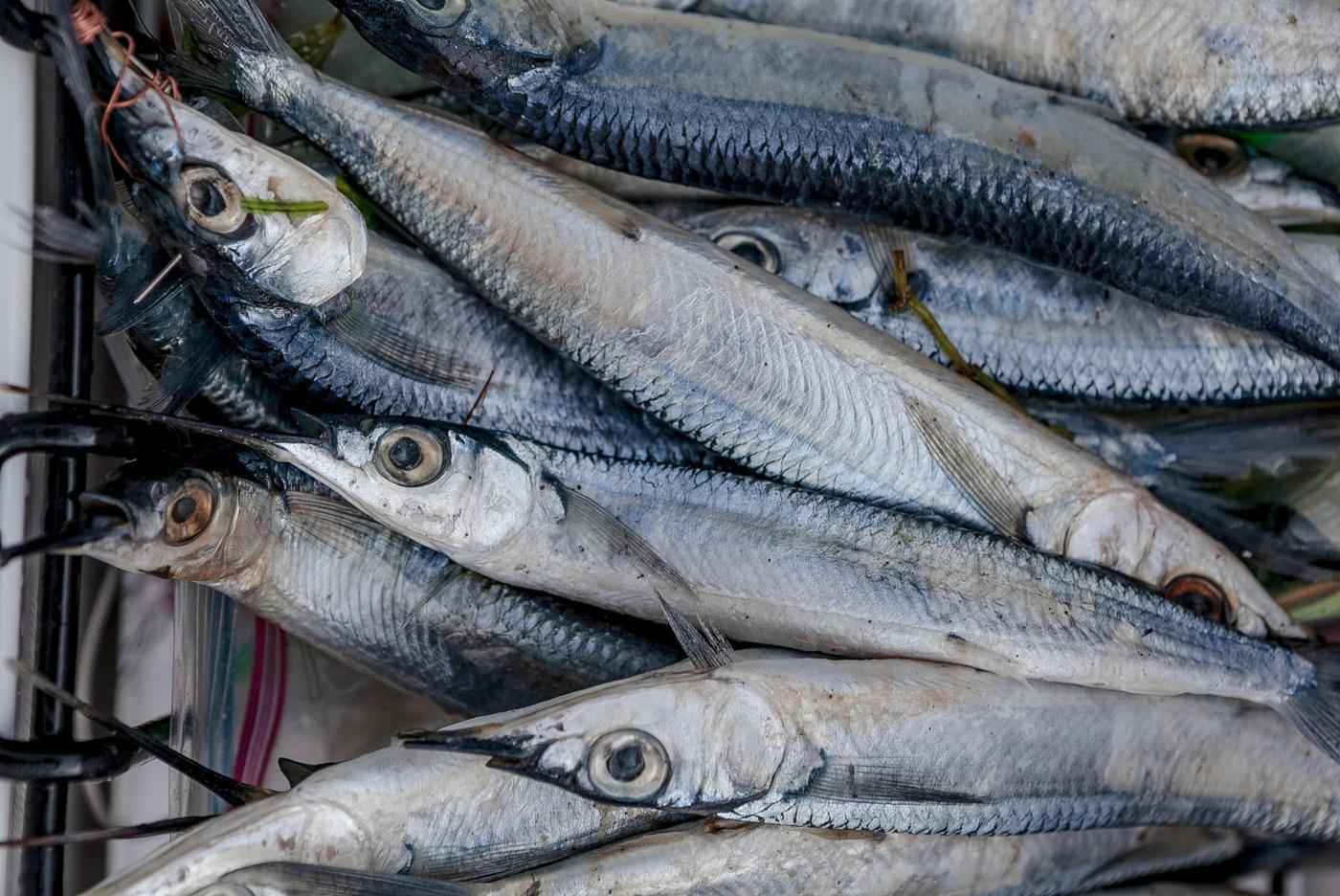 Caribbean island adventure sightseeing tours in grenada for Deep sea fishing jamaica