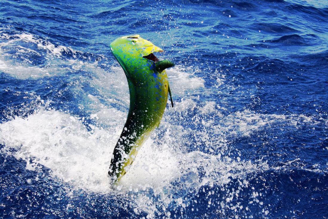 Punta cana deep sea fishing ready to reel one in for Deep sea fishing punta cana