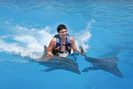 dolphin swim in cancun